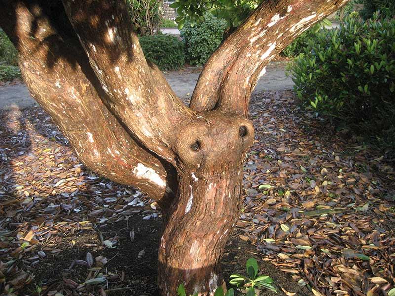 """""""Auch ein Baum hat Augen"""" auf verreimt.de"""