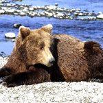 Auf der Bärenhaut
