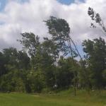 Bäume biegen sich im Sturm