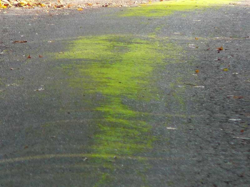 Die grüne Mitte