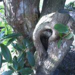 Ein Ohr im Baum