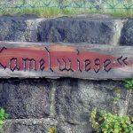 Kamelwiese
