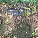 Zwischen-Baum-und-Borke