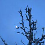 Im Mondschein begegnen