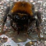 Ein Löffenchen Honig am Tag